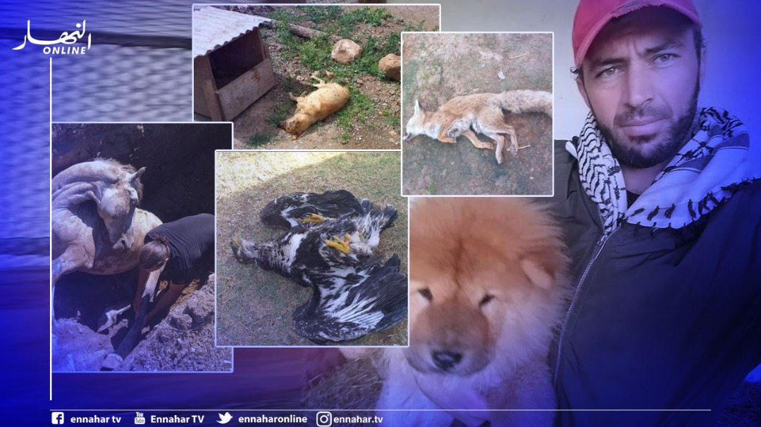 relizane-…-the-owner-of-the-animal-husbandry-pavilion-in-marjah-park,-sidi-abed,-explains-the-pictures-of-her-death-in-circulation