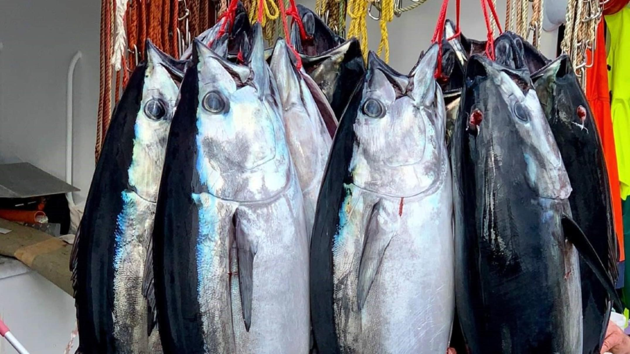 dozens-of-vessels,-planes-search-for-tuna-to-save-fishing-season