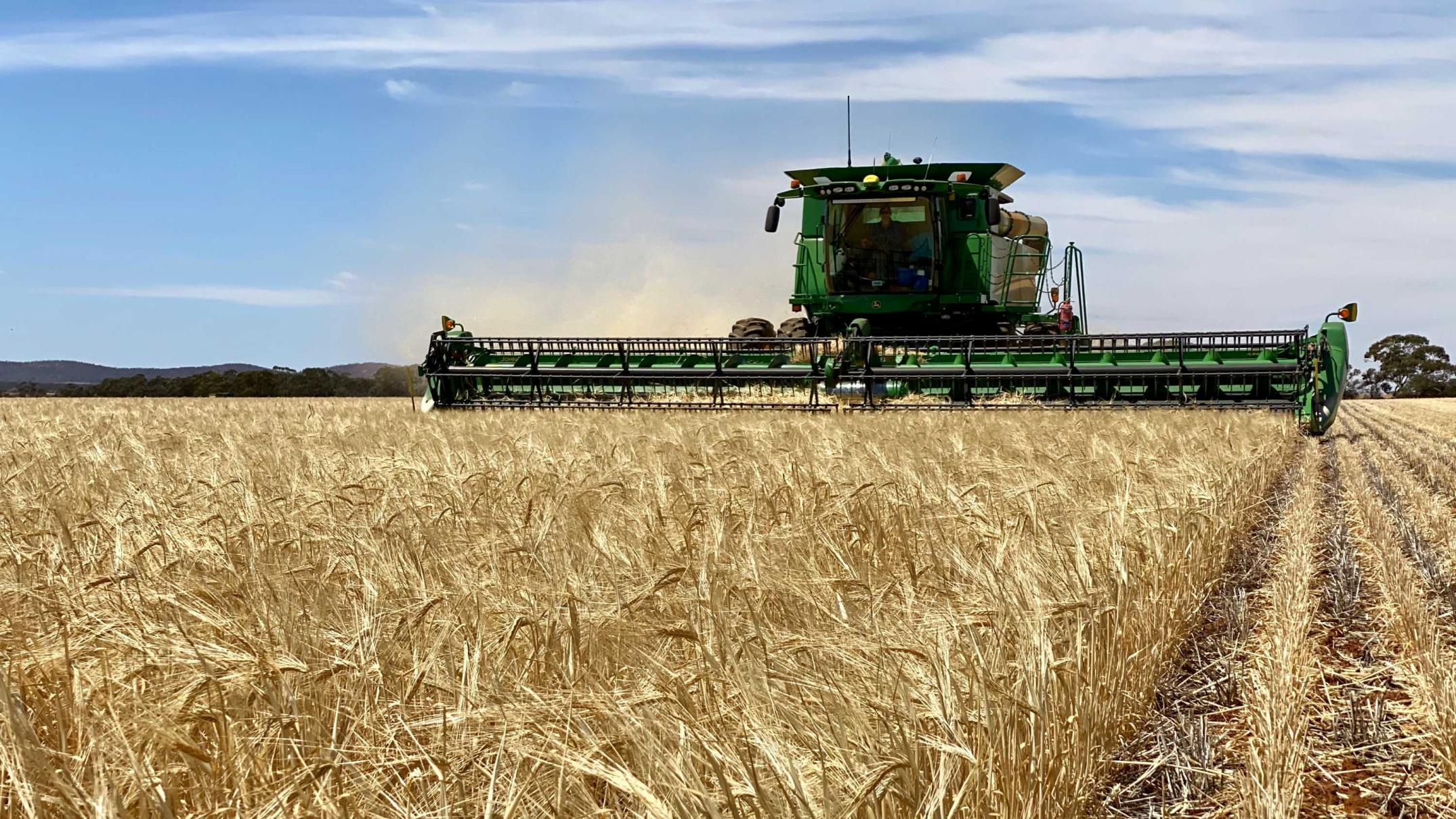 australian-barley-finds-a-new-home-in-mexico-after-china-ban