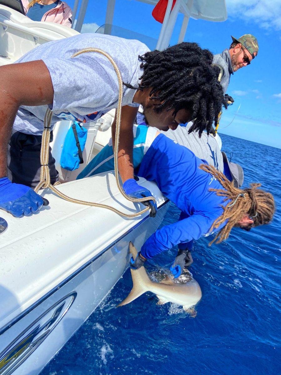 bamsi-students-get-hands-on-with-shark-expedition