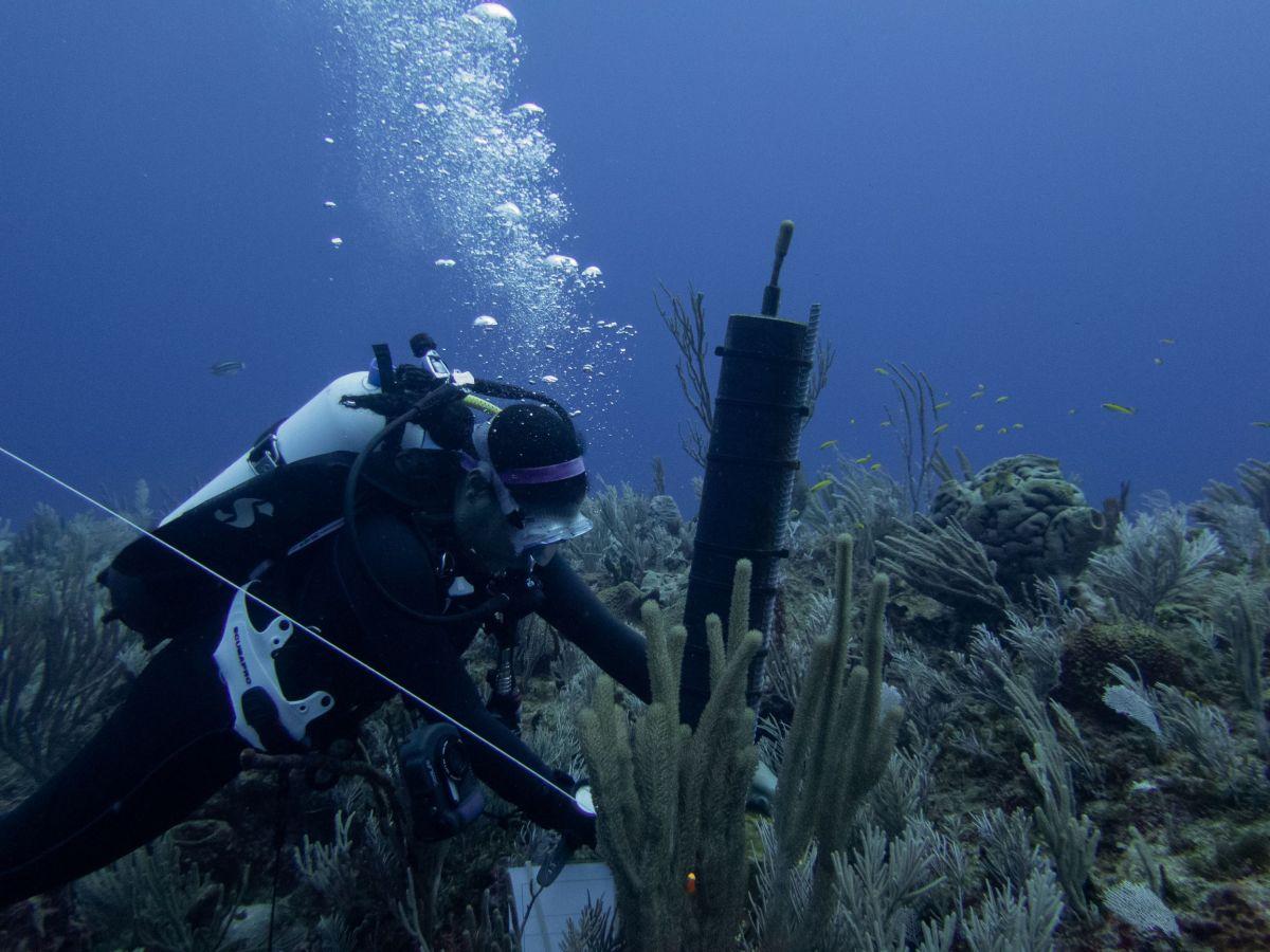 more-work-needed-to-save-critically-endangered-nassau-grouper,-scientist-warns