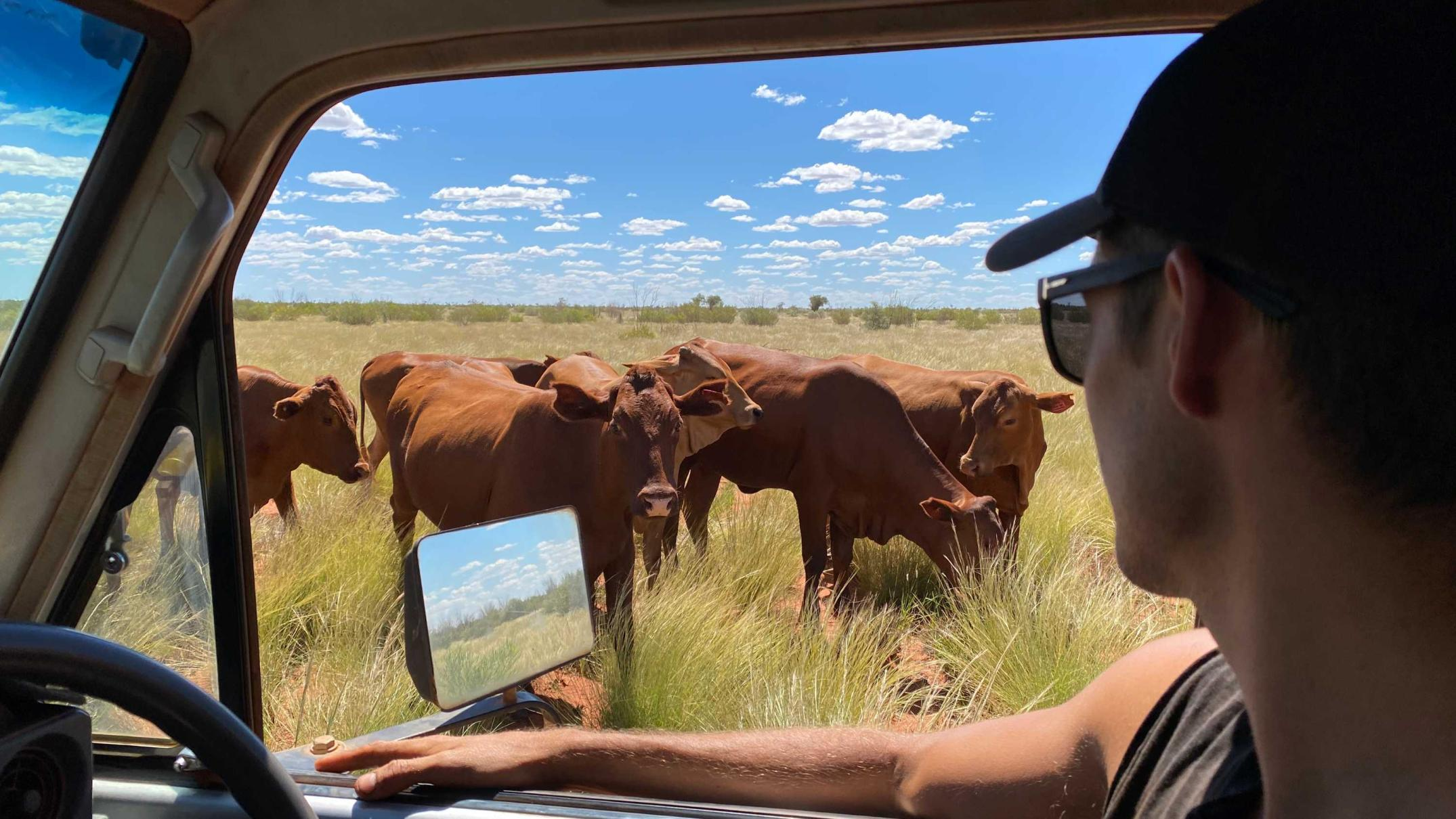 from-power-points-to-a-cattle-joint,-a-young-sparky-returns-to-help-run-a-family-property