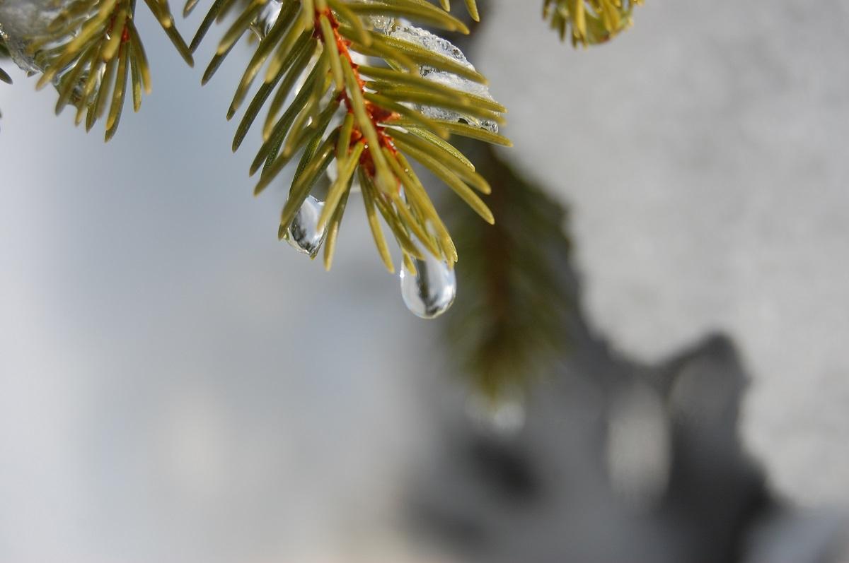 Погода-в-Бресте-на-24-января