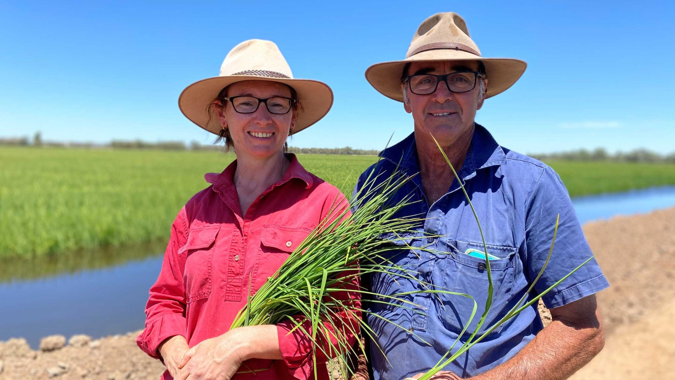 rice-and-summer-crops-sprout-in-murrumbidgee-valley-as-full-water-allocation-returns