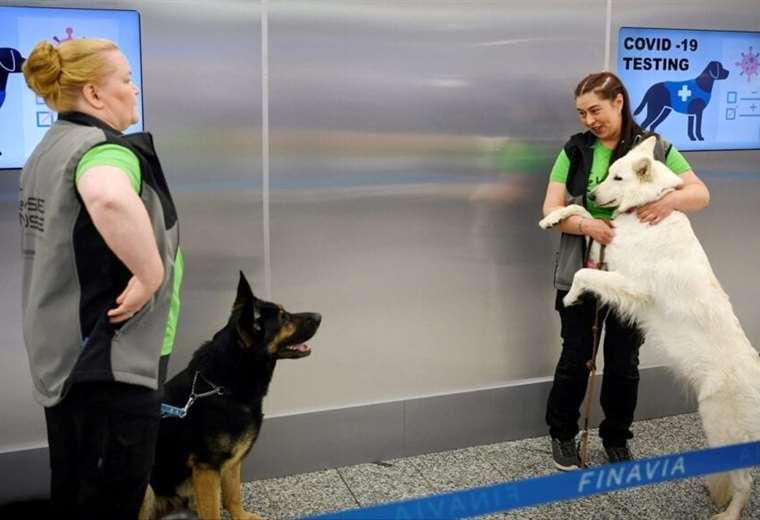 los-checos-preparan-a-los-perros-para-combatir-el-covid-19