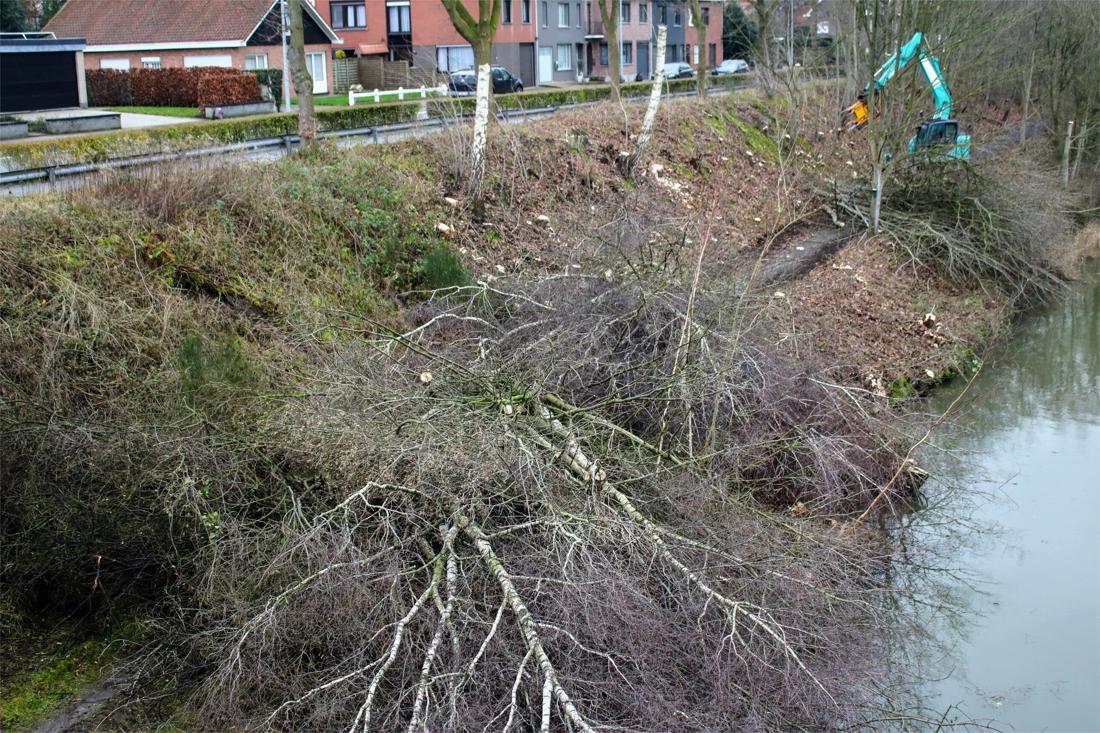 en-plots-waren-ze-weg:-zo-moet-er-een-einde-komen-aan-de-drastische-bomenkap-langs-kanalen-en-wegen