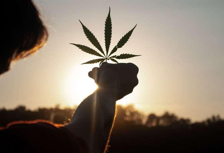 diputados-en-costa-rica-piden-al-gobierno-acelerar-debate-sobre-cannabis-medicinal