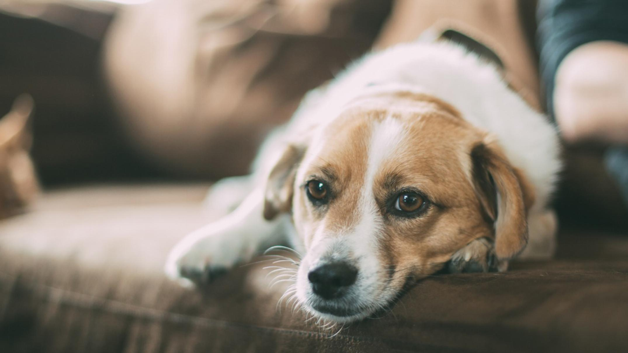 a-new-deadly-disease-outbreak-is-threatening-dogs.-this-is-what-you-need-to-watch-for