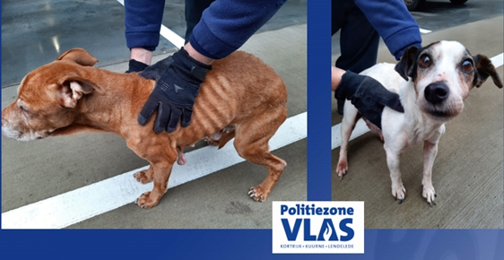 police-quickly-track-down-owners-of-severely-neglected-dogs:-police-report-for-neglect