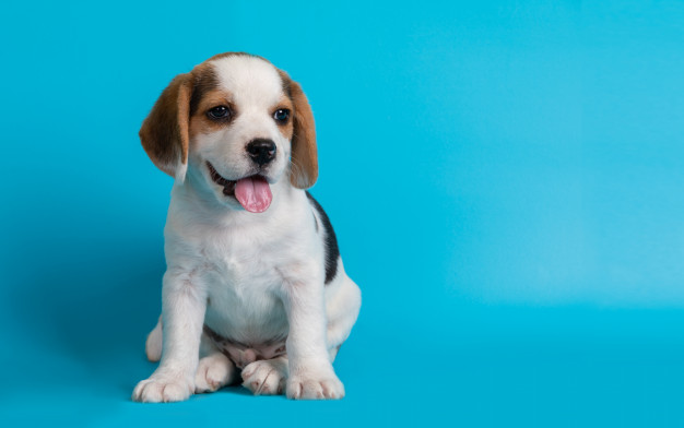 learn-how-dog-blood-types-work