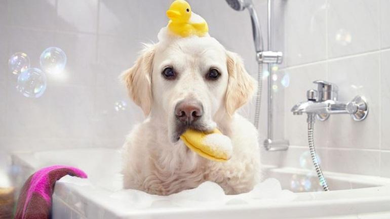 Πώς-να-κάνετε-το-μπάνιο-του-σκυλιού-σας-παιχνιδάκι