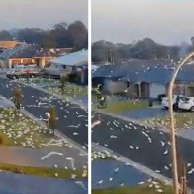 duizenden-kaketoes-palmen-australische-wijk-in:-'dit-is-een-hitchcockiaanse-situatie'