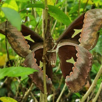 la-foto-del-dia-¿hoja-o-mariposa?
