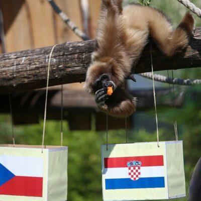 zagrebacki-gibon-predvidio-rezultat-izmedu-hrvatske-i-ceske,-evo-kome-ide-pobjeda