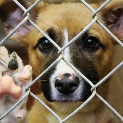 asociaciones-que-rescatan-a-perros-callejeros-en-la-ciudad-de-guatemala