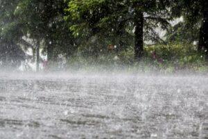 Буря-изрови-улици,-спря-тока-и-повали-дървета-в-Лом-(СНИМКИ)