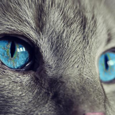svelata-la-razza-di-gatto-che-non-graffia,-non-morde-e-non-soffre-l'appartamento