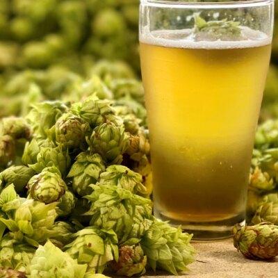 brewing-a-new-kind-of-west-australian-hop
