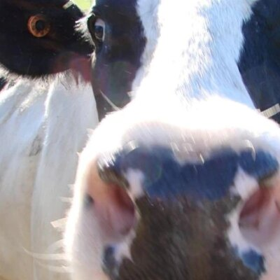 dairy-giant-fonterra-australia-looking-at-options-for-australian-ownership