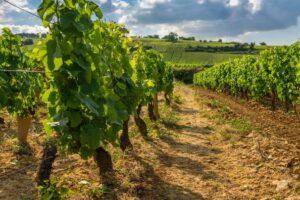 investir-dans-une-vigne:-le-palmares-des-appellations-les-plus-rentables