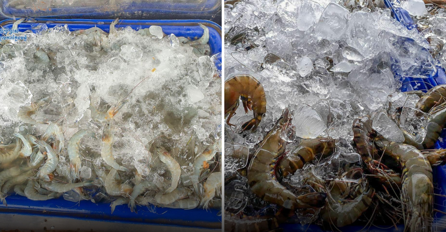 freshwater-prawns-and-lobsters-for-sale-on-tralok-bek-road