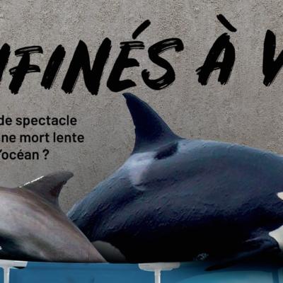 une-nouvelle-campagne-contre-les-delphinariums